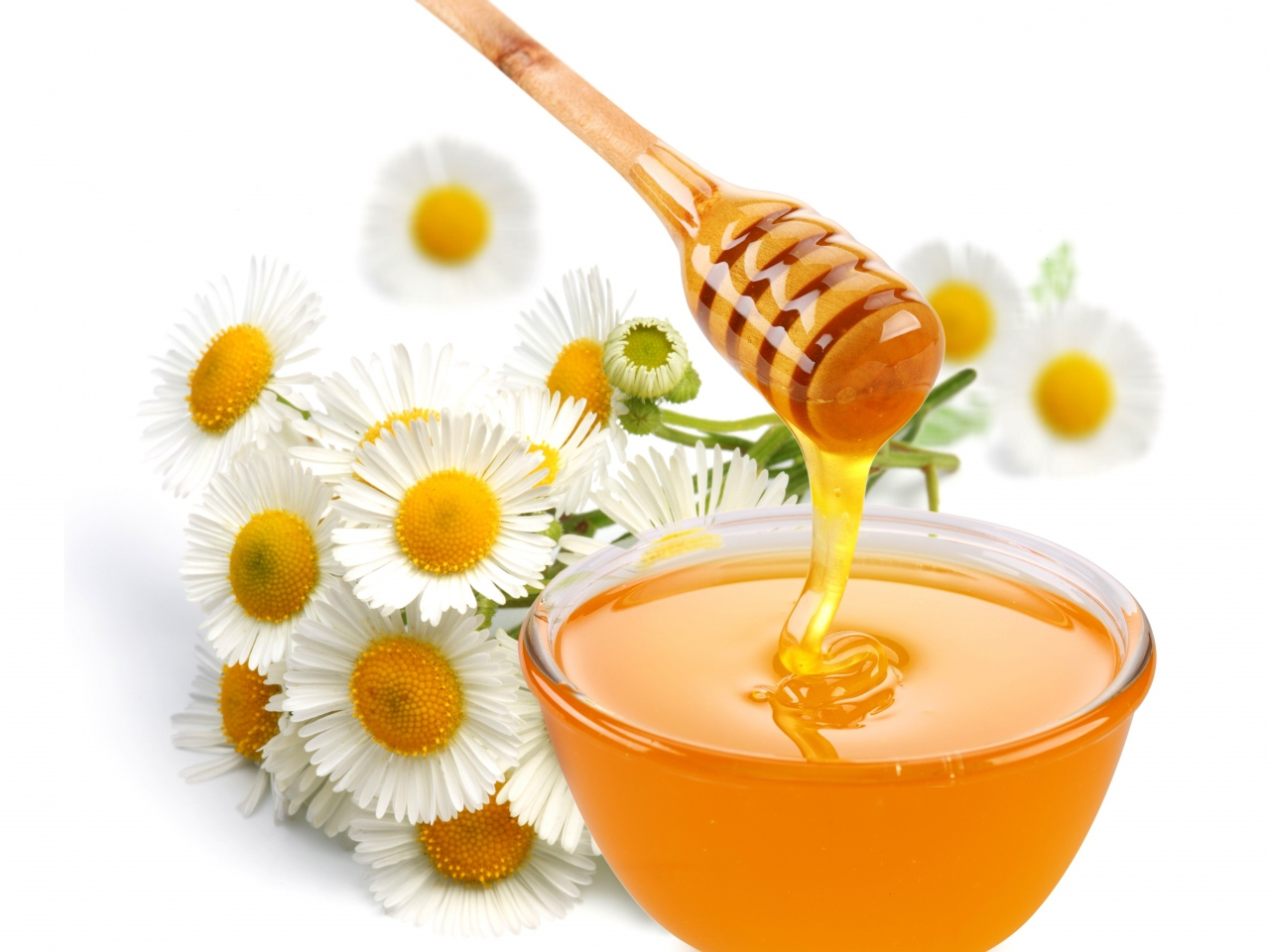 honey-flower-chamomile-sweet